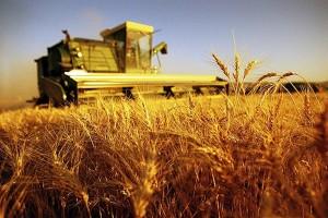 terreni-agricoli-fabbricati-rurali-imu